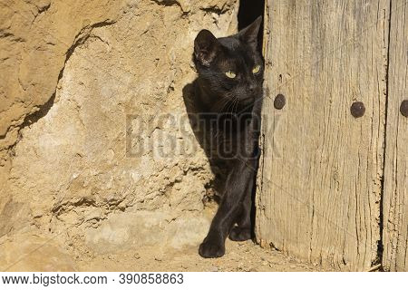 A Black Stray Cat, Cautiously Peeks Out Of An Old Wooden Door In The Small Town Of Ores, Aragon, Spa