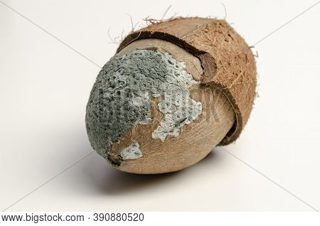Mold Coconut Isolated On White Background. Ugly Food.