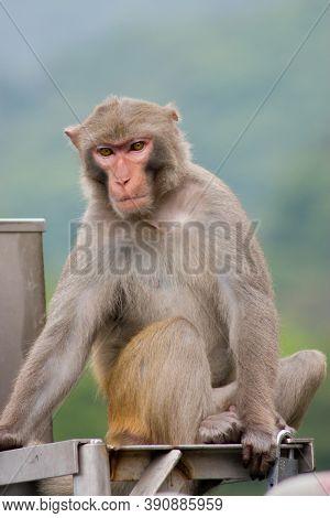 14 April 2007 Monkey At The Kowloon Reservoir, Hong Kong
