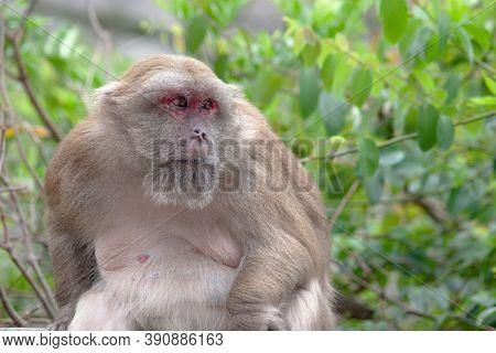 Monkey At The Kowloon Reservoir, Hong Kong  14 April 2007