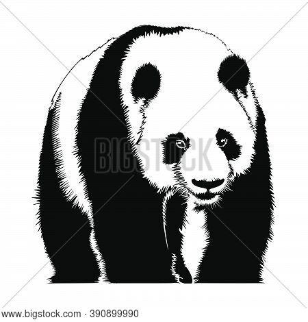 Panda Bear Black Icon Isolated On White Background. Panda Animal Silhouette. Vector Monochrome Hand