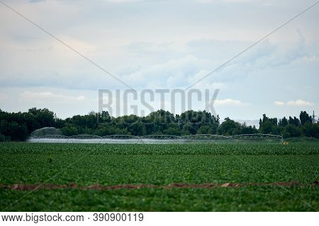 Irrigation System Watering Corn Field On Cloudy Summer Day
