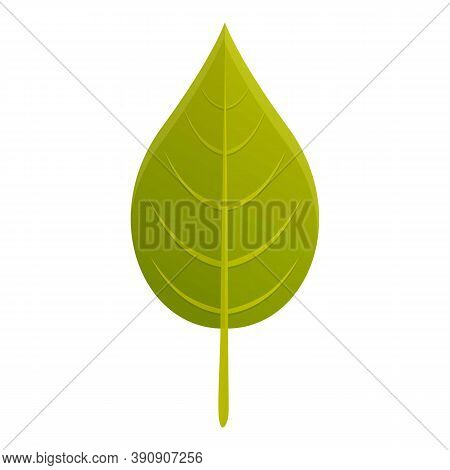 Botany Green Leaf Icon. Cartoon Of Botany Green Leaf Vector Icon For Web Design Isolated On White Ba