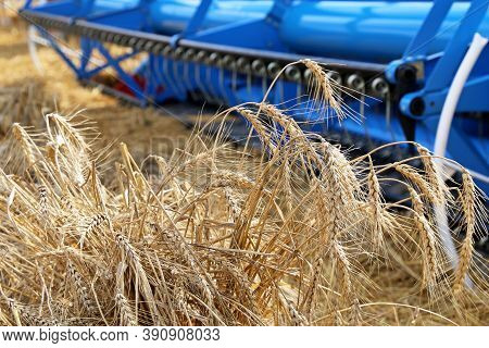 Combine Harvester Working On The Field, Close-up Ears Of Wheat. Rural Scenery, Concept Of Harvesting