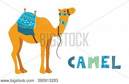 Camel Cartoon Vector Illustration On White. Decorated Camel With Seat For A Ride. Camel Traditional