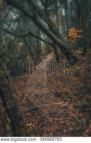 Path In The Mystical Autumn Dark Forest