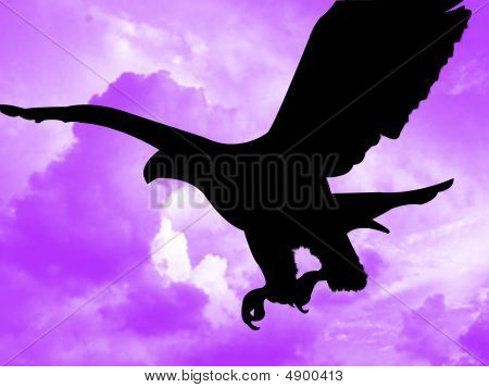 Eagle in the sky flying and hunting poster