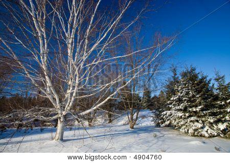 Snowy Scenic