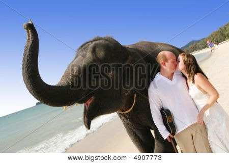 Bride and groom with an elephant on the beach. poster