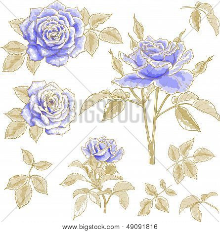 Blue roses set
