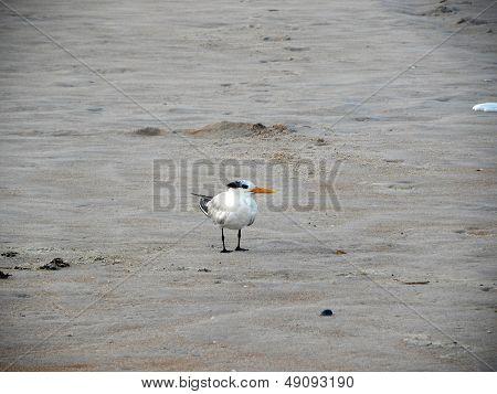 Gull on Sand