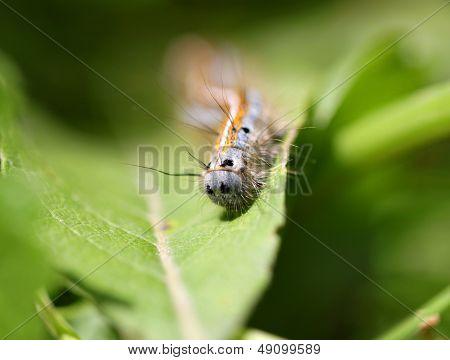 caterpillar crawling on a green leaf