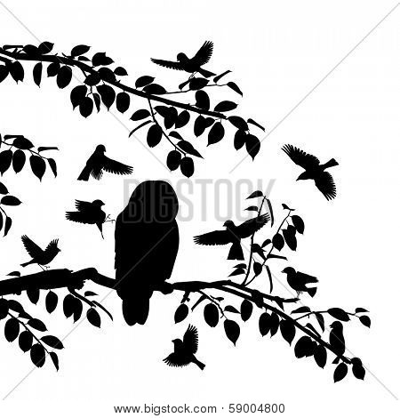 Editable vector silhouettes of songbirds mobbing an owl with all birds as separate objects