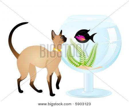 The cat plays with a fish
