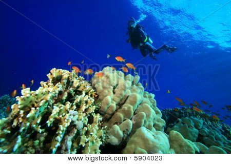 Young woman scuba dives over a coral reef