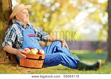 Male worker in dungarees with basket of harvested apples sitting in orchard