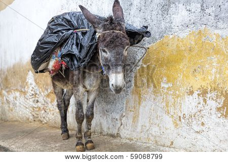 Donkey standing in an alley in Morocco, Africa