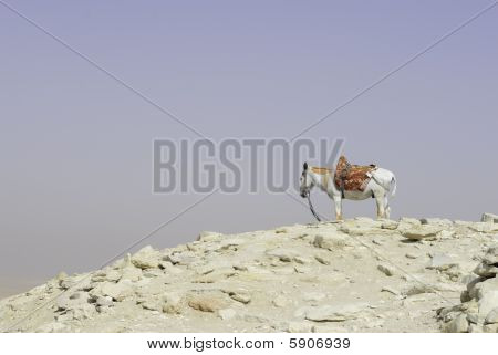 A donkey looking horizon atop a hill. poster