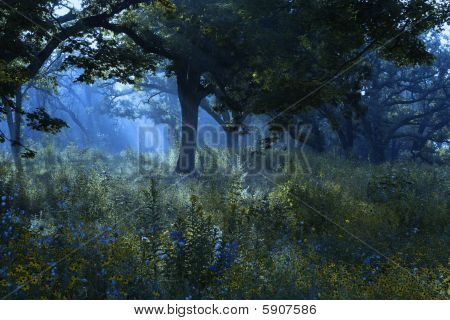 Sunbeams in the misty forest