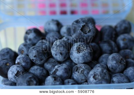 blue berry fruits isolated on white background poster