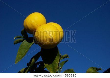 Citrus Sky