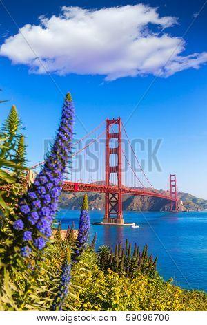 Golden Gate Bridge San Francisco purple flowers Echium candicans in California
