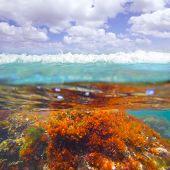 Mediterranean underwater seaweed algae in Denia Javea Alicante spain poster