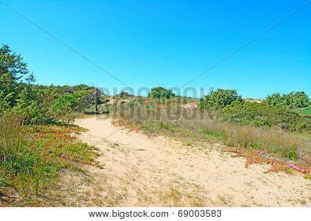 Sand And Plants
