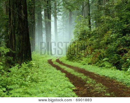 Prachtige landschap en bomen