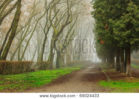 Road In Mysterious A Bit Creepy And Misty Park