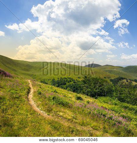Summer Walks To Highland