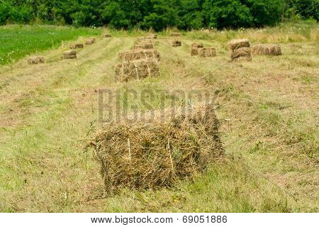 Freshly Made From Straw Bales In A Field