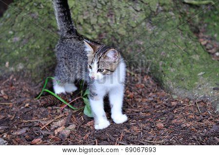 Kitten by tree
