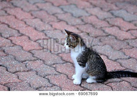 Kitten on bricks