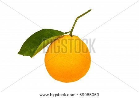 Fresh Sweet Orange With Green Leaf
