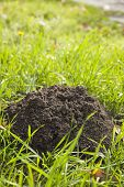 A mole's hole in green grass at autumn poster