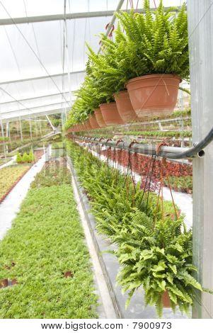 Nusery Garden