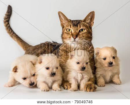 Cat And Puppies  In Studio