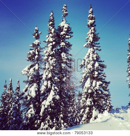 Scenic Instagram Of Trees Covered In Snow In Winter