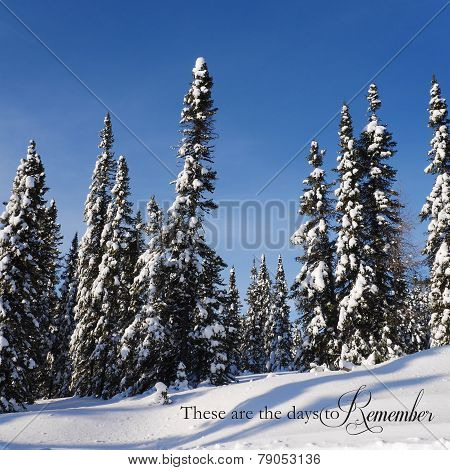 Scenic Instagram Of Trees Covered In Snow In Winter With Quote