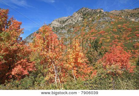 The Uinta National Forest, Utah