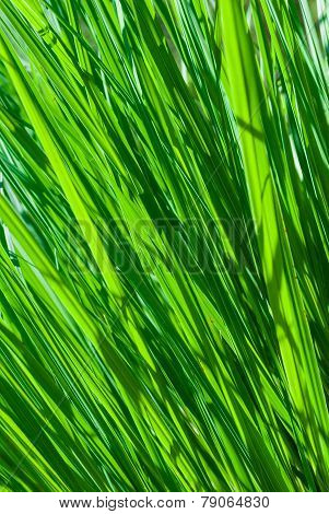 Abstract Fresh Grass Background.