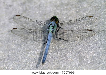 dragonfly with opened wings