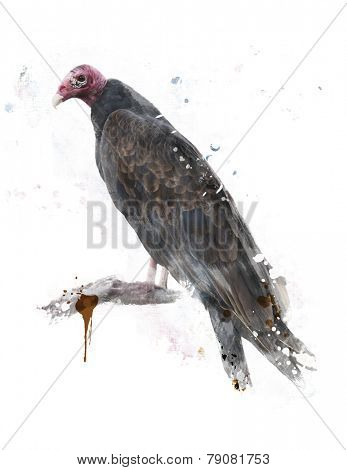 Digital Painting Of Turkey Vulture Perching