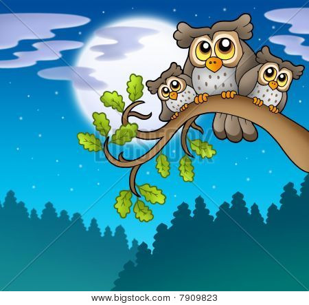 Cute owls on branch at night - color illustration. poster