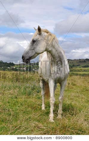 poster of A horse on a summer pasture in a rural landscape under clouds.