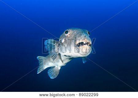 Ugly Fish!