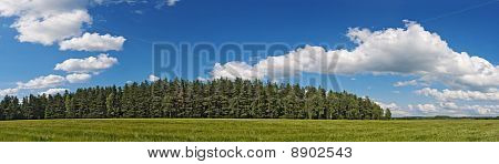 Agriculture Field And Forest Under Blue Sky