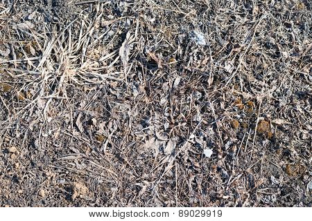 Dry brown lifeless grass with stones