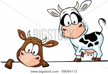 Cow Standing And Peeks Out From Behind A White Surface - Vector Illustration